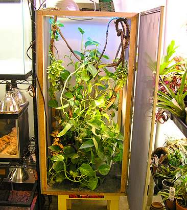 Amphibian Care >> Building a Screen Cage for Reptiles