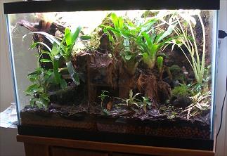 Amphibian Care Terrarium And Vivarium Maintenance