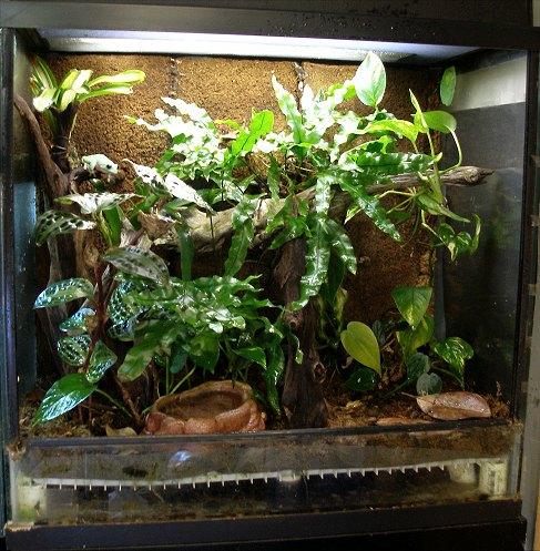 Amphibian Care Tropical Terrarium Design