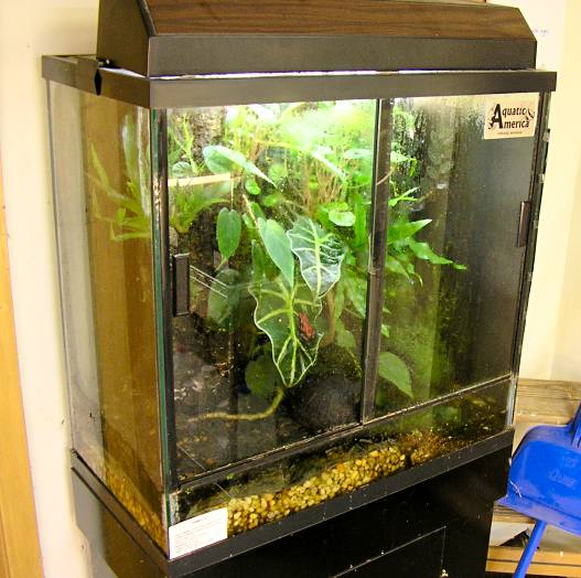 Amphibian Care Poison Dart Frog Dendrobatidae Care