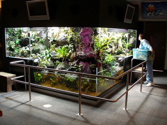 http://www.amphibiancare.com/frogs/gallery/images/henryvilaszoo/public/01.JPG